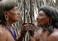 Amazon Tribal Warriors